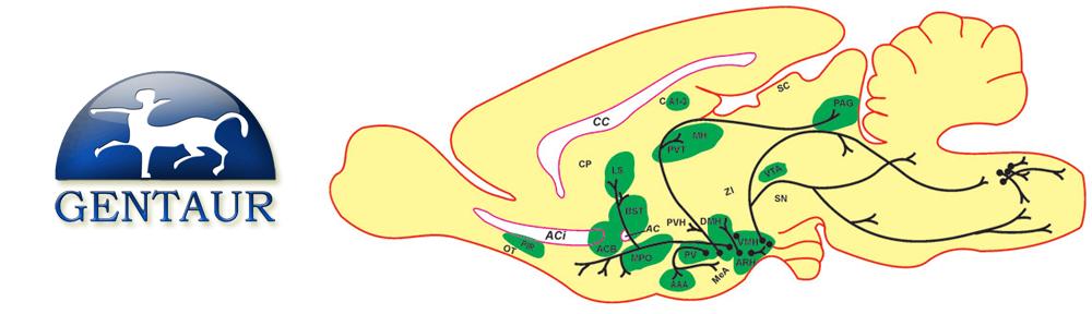 Melanocortin Receptors